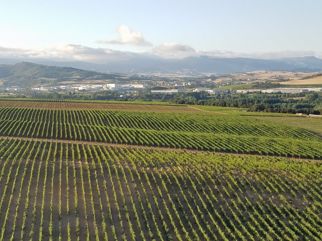 Arinzano vineyards